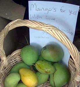 mangoes to give away
