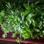 Gardening in Small Spaces: Go for Herbs