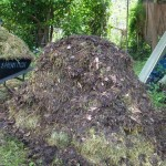 True Love is a Pile of Compost