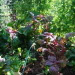 Fruiting Planting Days in Mid Summer – Don't Be Afraid of Shade