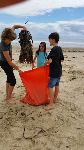 Ollie Tayla and Kaela collecting seaweed