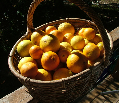 basket of citrus